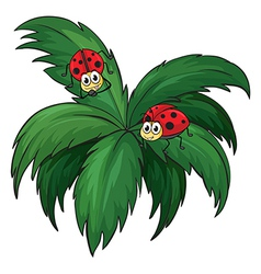 A plant with two ladybugs vector image vector image
