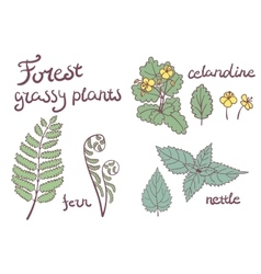 Forest grassy plants set vector