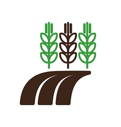 Ears wheat barley or rye field icon farm vector