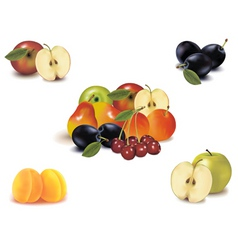 Big group with nine fruit vector