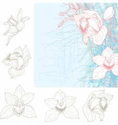 orchid sketch vector image