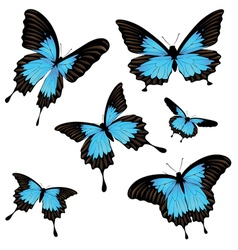 Mountain swallowtail set2 vector