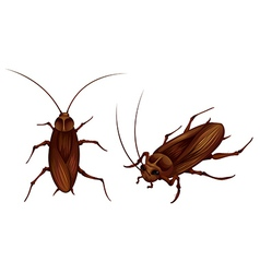 Cockroaches vector