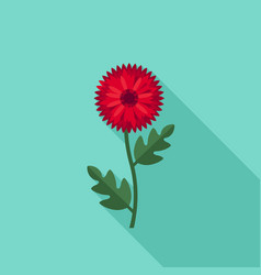 chrysanthemum flower icon vector image vector image