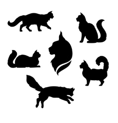 Maine coon cat icons and silhouettes vector