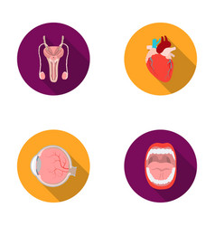 male system heart eyeball oral cavity organs vector image