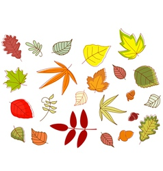 Autumnal colorful leaves set vector image