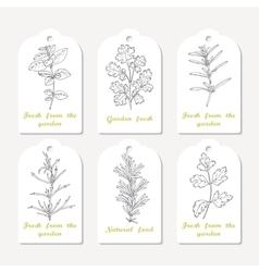 Tags collection with hand drawn spicy herbs vector image vector image