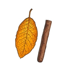 Unlabelled unlit brown Caribbean Cuban cigar vector image