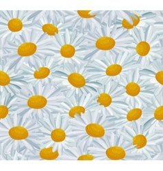 Seamless pattern with daises vector