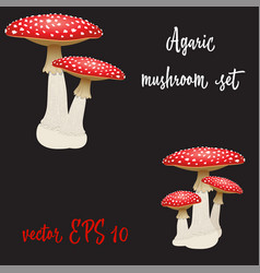 Set of three fly agaric mushrooms isolated vector