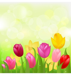 Colored Tulips vector image