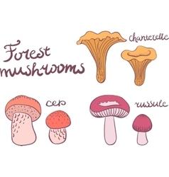Forest mushrooms set vector image
