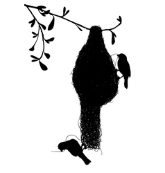 Weaverbirds silhouette vector image vector image