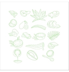 Aloe avocado and coconut set vector