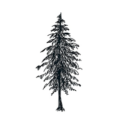 A pine tree stand on vector image vector image