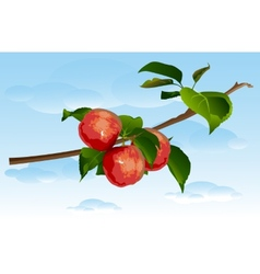 Three apples on a branch vector image vector image