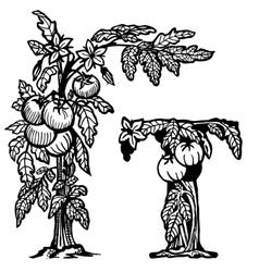 Tomato brunch litera t vector