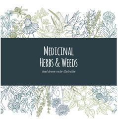 horizontal banner with color medicinal flowers and vector image