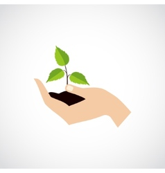 Hand Hold Protect Plant vector image