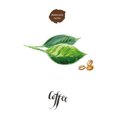 Green leaves of coffee and coffee beans vector