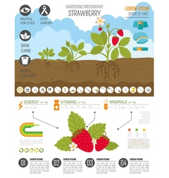 Gardening work farming infographic strawberry vector