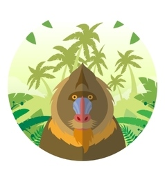 Mandrill on the jungle background vector