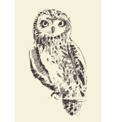 Owl vintage retro hand drawn sketch vector