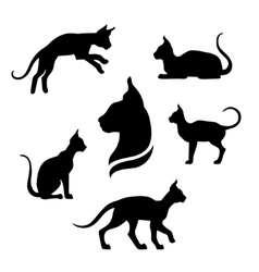 Sphynx cat icons and silhouettes vector image