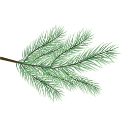 fur-tree branch vector image vector image