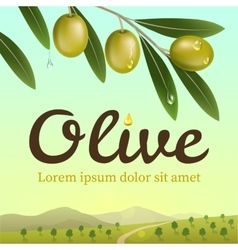 Label of green olives realistic olive branch vector