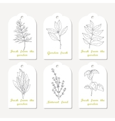 Tags collection with hand drawn spicy herbs dill vector