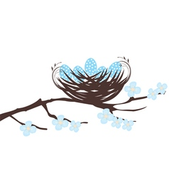 birds eggs blue vector image