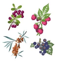Berrys set 01 vector