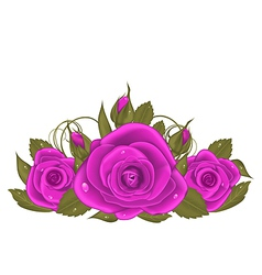 Bouquet beautiful roses isolated on white vector