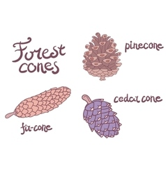 Forest conifer cones set vector
