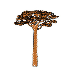 African tree isolated vector