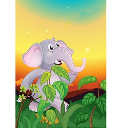 An elephant walking in the field vector image vector image
