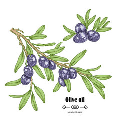 Hand drawn black olive branch in sketch style vector