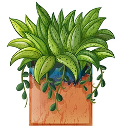 A potted plant vector