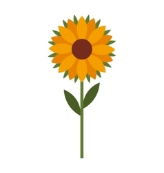 beautiful sunflower isolated icon design vector image