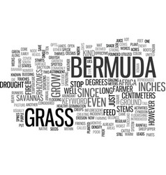 Bermuda grass text word cloud concept vector