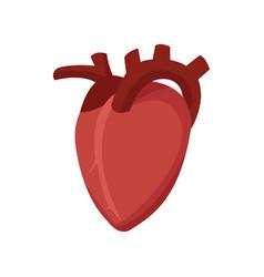 Human heart cardio healthy icon vector