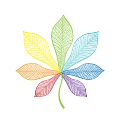 chestnut leaf rainbow vector image vector image