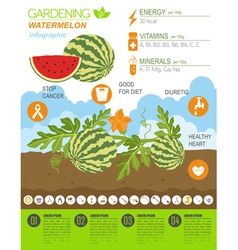 Gardening work farming infographicwatermelon vector