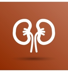 Kidney icon isolated human two vein white medical vector