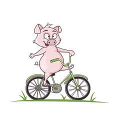 Pig on a bike vector