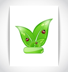 Green eco leaves with ladybugs on the white paper vector image