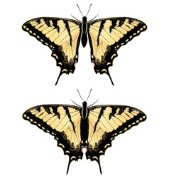 Tiger swallowtail butterfly4 vector