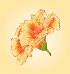Yellow hibiscus tropical flowers blossom simple vector